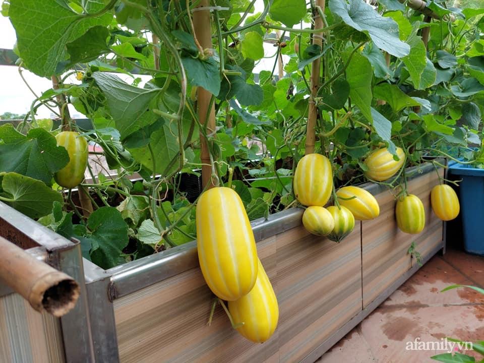 Sân thượng 50m² không khác gì trang trại với đủ loại rau quả sạch theo mùa của mẹ đảm ở Hà Nội - ảnh 8