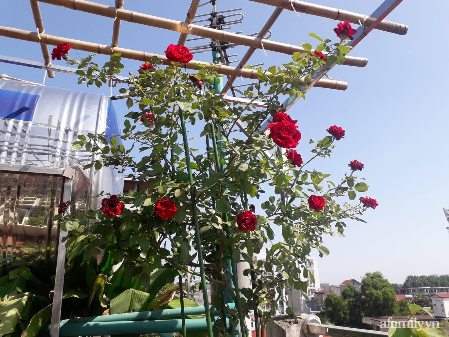 Sân thượng 50m² không khác gì trang trại với đủ loại rau quả sạch theo mùa của mẹ đảm ở Hà Nội - ảnh 3