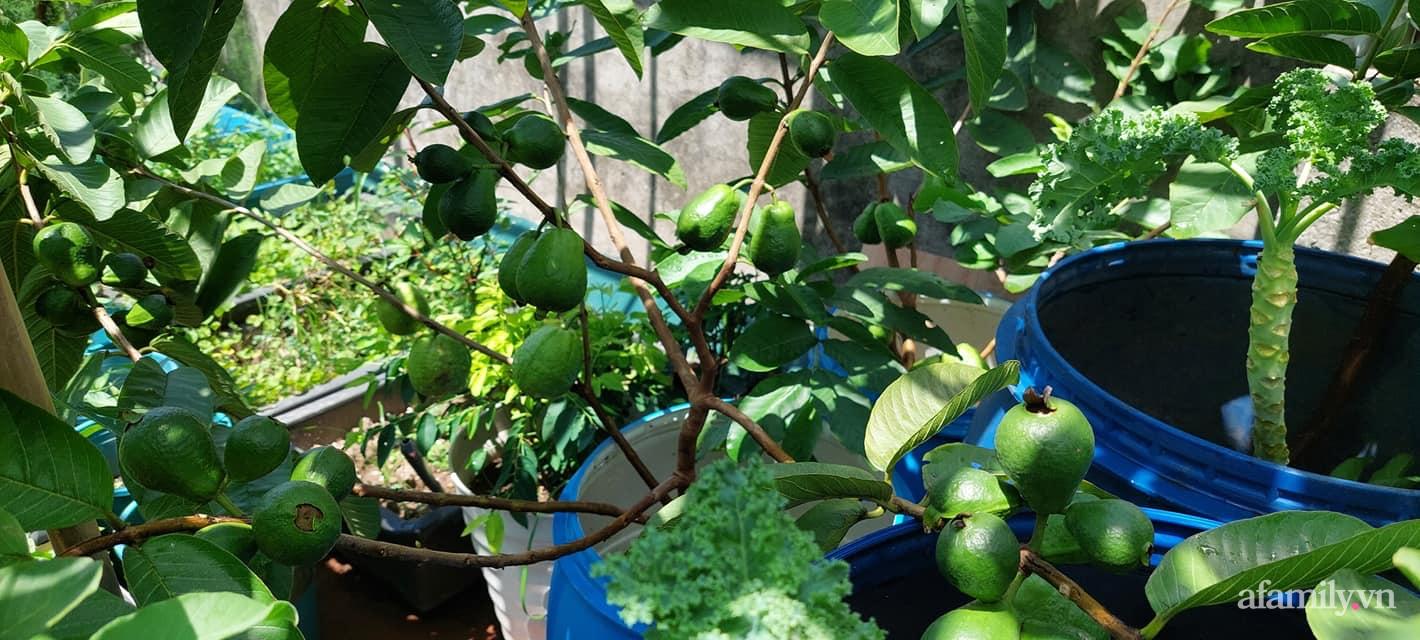 Sân thượng 50m² không khác gì trang trại với đủ loại rau quả sạch theo mùa của mẹ đảm ở Hà Nội - ảnh 7