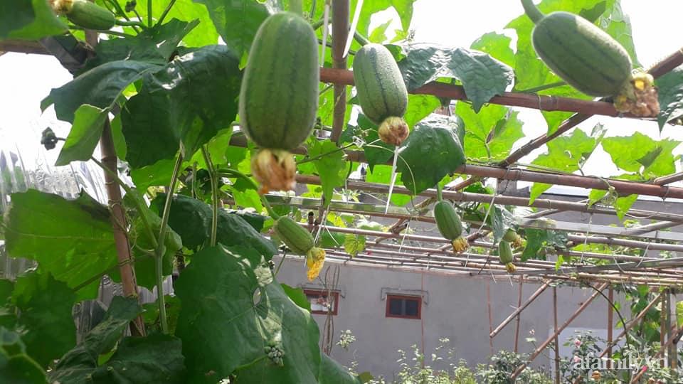Sân thượng 50m² không khác gì trang trại với đủ loại rau quả sạch theo mùa của mẹ đảm ở Hà Nội - ảnh 4