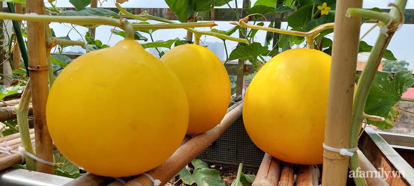 Sân thượng 50m² không khác gì trang trại với đủ loại rau quả sạch theo mùa của mẹ đảm ở Hà Nội - ảnh 16
