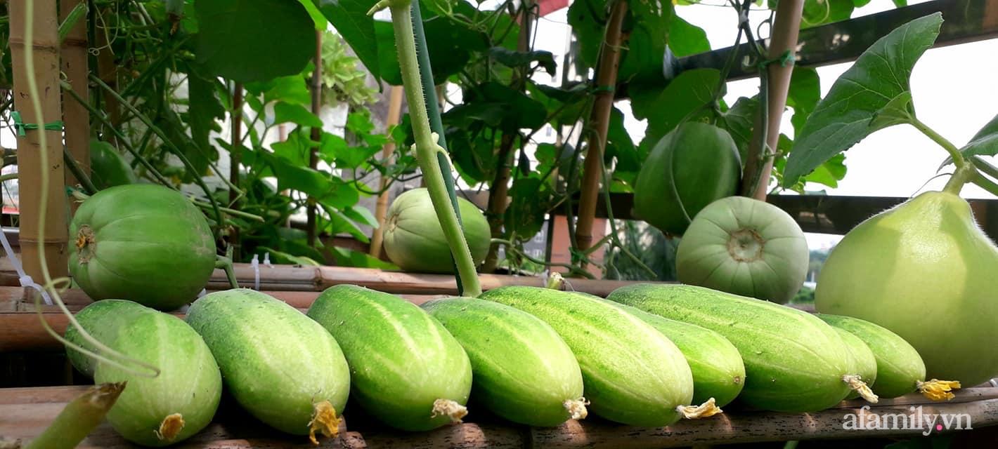 Sân thượng 50m² không khác gì trang trại với đủ loại rau quả sạch theo mùa của mẹ đảm ở Hà Nội - ảnh 17