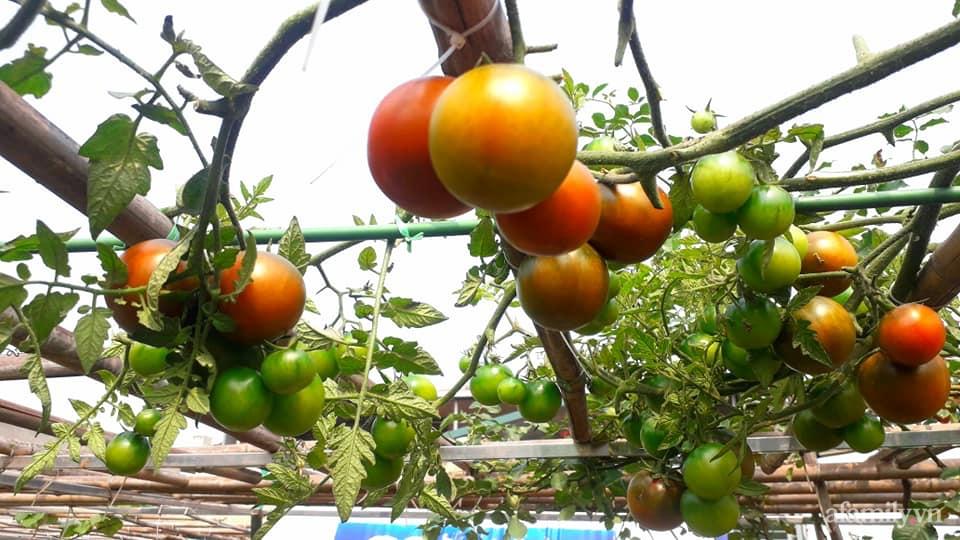 Sân thượng 50m² không khác gì trang trại với đủ loại rau quả sạch theo mùa của mẹ đảm ở Hà Nội - ảnh 10
