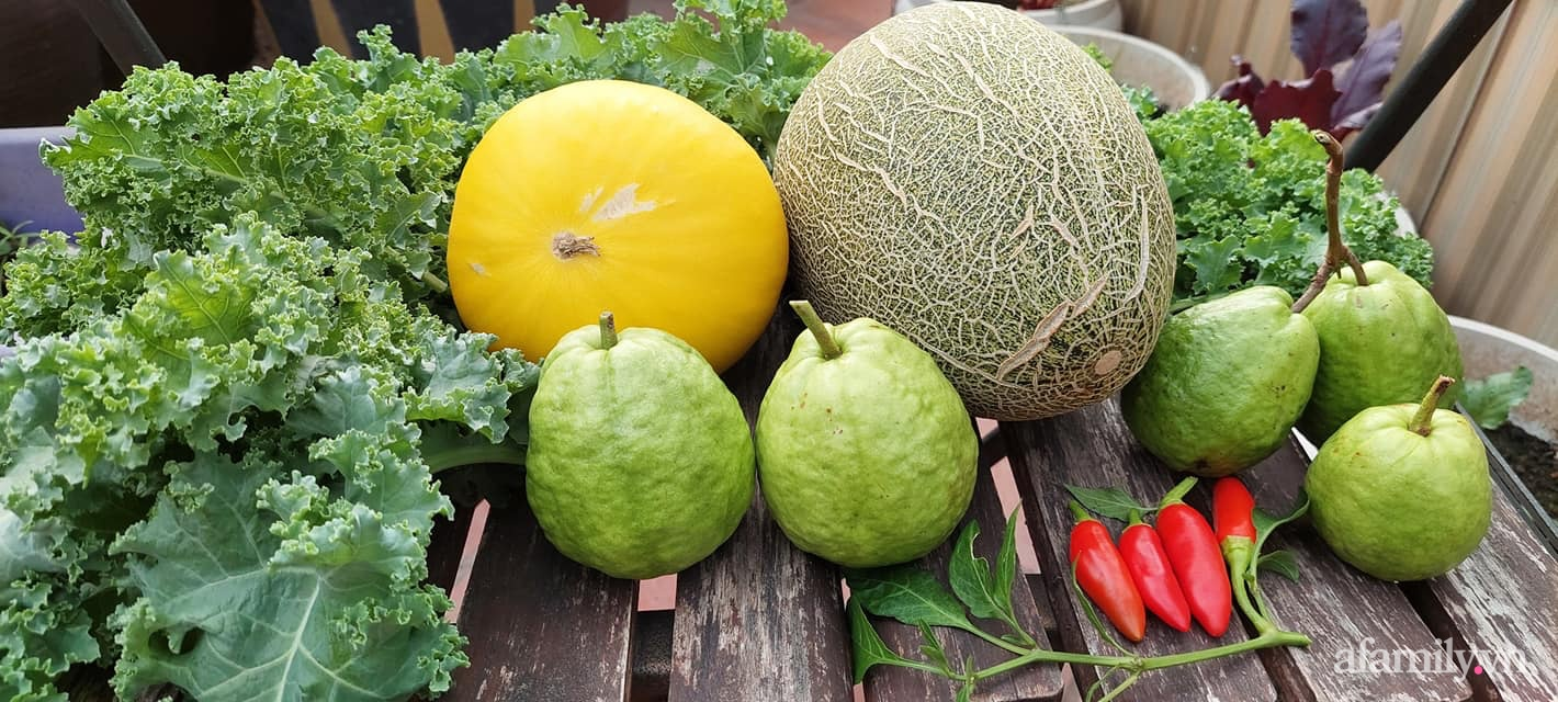 Sân thượng 50m² không khác gì trang trại với đủ loại rau quả sạch theo mùa của mẹ đảm ở Hà Nội - ảnh 15