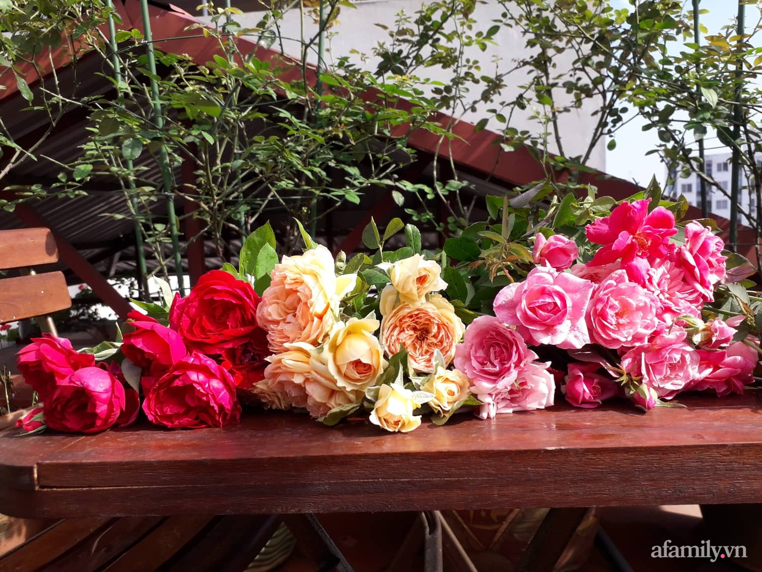 Sân thượng 50m² không khác gì trang trại với đủ loại rau quả sạch theo mùa của mẹ đảm ở Hà Nội - ảnh 29