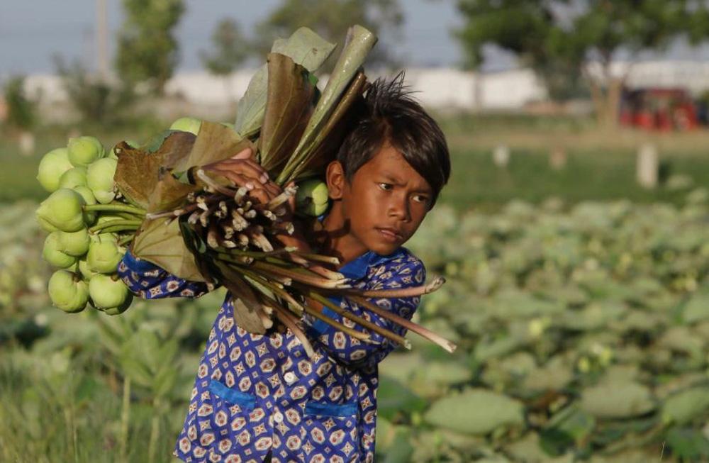 24h qua ảnh: Cậu bé thu hoạch hoa sen ở Campuchia - ảnh 2