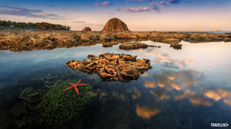 Gành Đá Đĩa Phú Yên tuyệt đẹp qua lăng kính vlogger Bùi Tiên Phong - ảnh 12