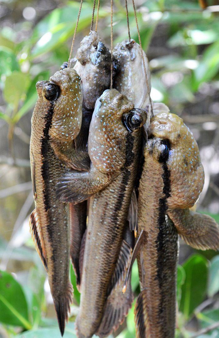 Thương nhớ đặc sản Cà Mau thơm ngon đậm đà hương vị sông nước miền Tây - ảnh 4
