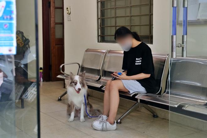 Dắt chó đi dạo khi Hà Nội giãn cách xã hội, cô gái trẻ bị phạt 2 triệu đồng - ảnh 2
