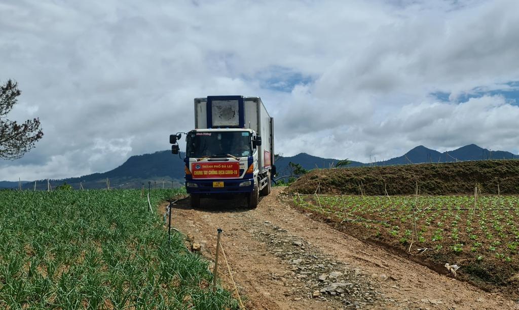 Hơn 250 tấn rau củ từ Đà Lạt hỗ trợ TP.HCM và các tỉnh vùng dịch Covid-19 - ảnh 12