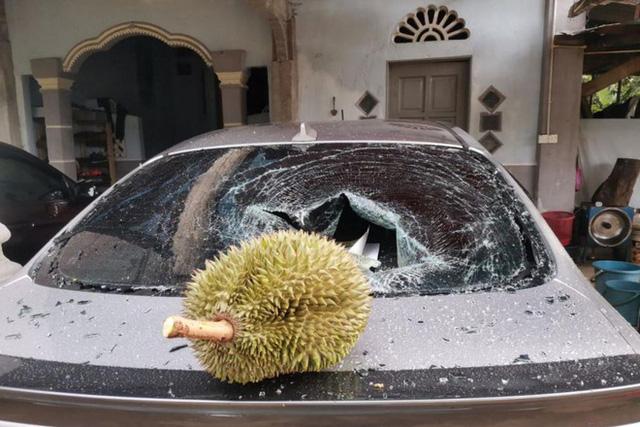 """Thêm anh bán trái cây có nỗi buồn giống chị Phượng Chanel: Sầu riêng rụng làm kính xe ô tô vỡ nát, lỡ có người bên trong coi như """"toang""""! - ảnh 2"""