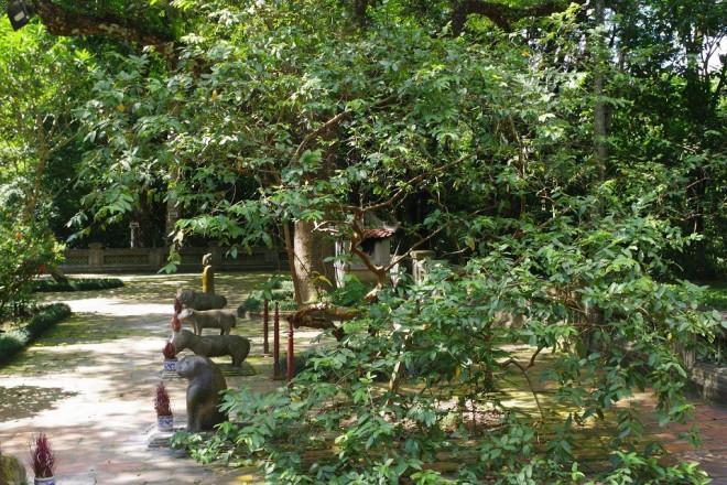Chuyện kỳ bí về 'cây lim hoá thân' và 'cây ổi cười' ở đất thiêng Lam Kinh - ảnh 5