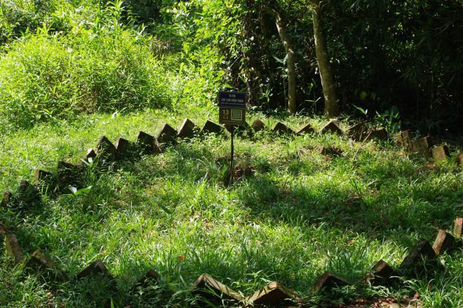 Chuyện kỳ bí về 'cây lim hoá thân' và 'cây ổi cười' ở đất thiêng Lam Kinh - ảnh 3