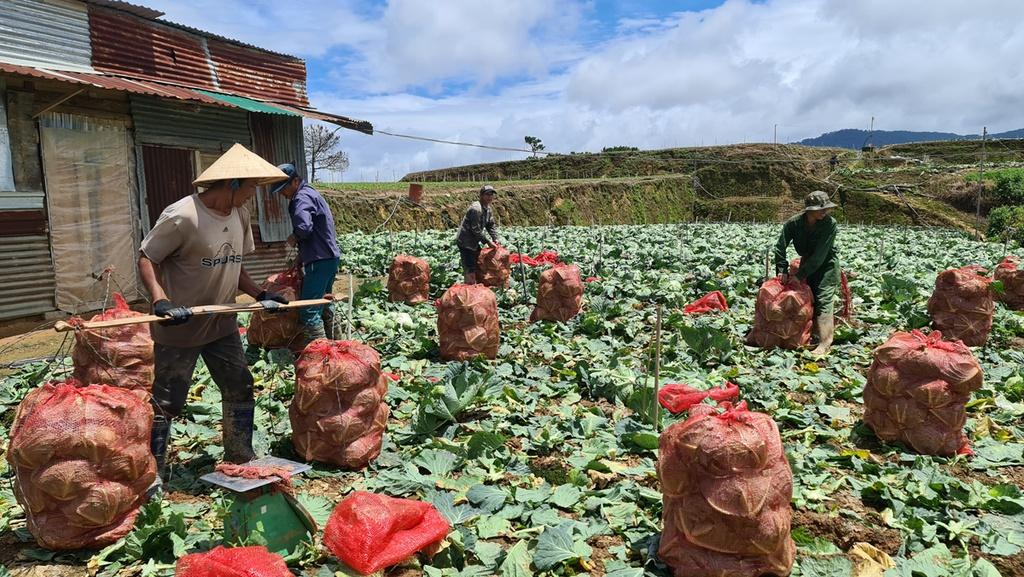 Hơn 250 tấn rau củ từ Đà Lạt hỗ trợ TP.HCM và các tỉnh vùng dịch Covid-19 - ảnh 11