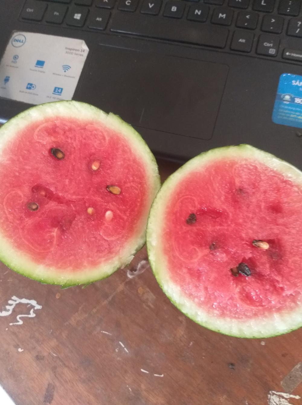 23 ngày sau khi phát hiện cây hoang, chủ vườn vặt trái định làm món kho, bổ ra mới sững sờ vì thành quả - ảnh 5