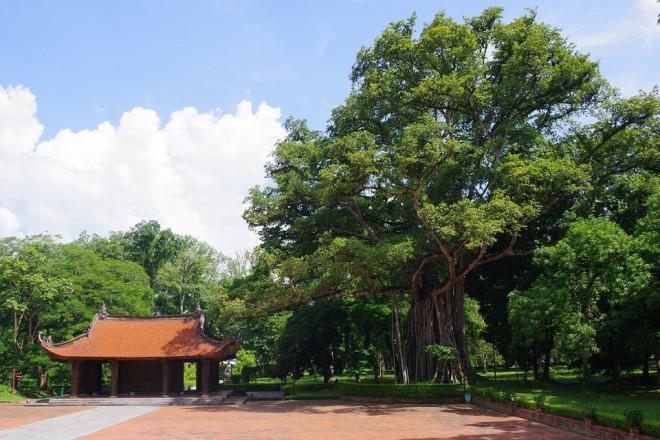 Chuyện kỳ bí về 'cây lim hoá thân' và 'cây ổi cười' ở đất thiêng Lam Kinh - ảnh 2
