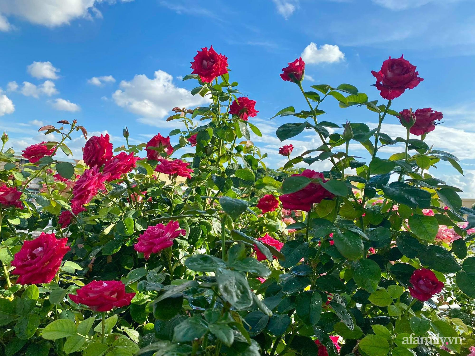 Sân thượng phủ kín hoa hồng và rau quả sạch ở Sài Gòn của Hoa hậu Janny Thủy Trần - ảnh 18