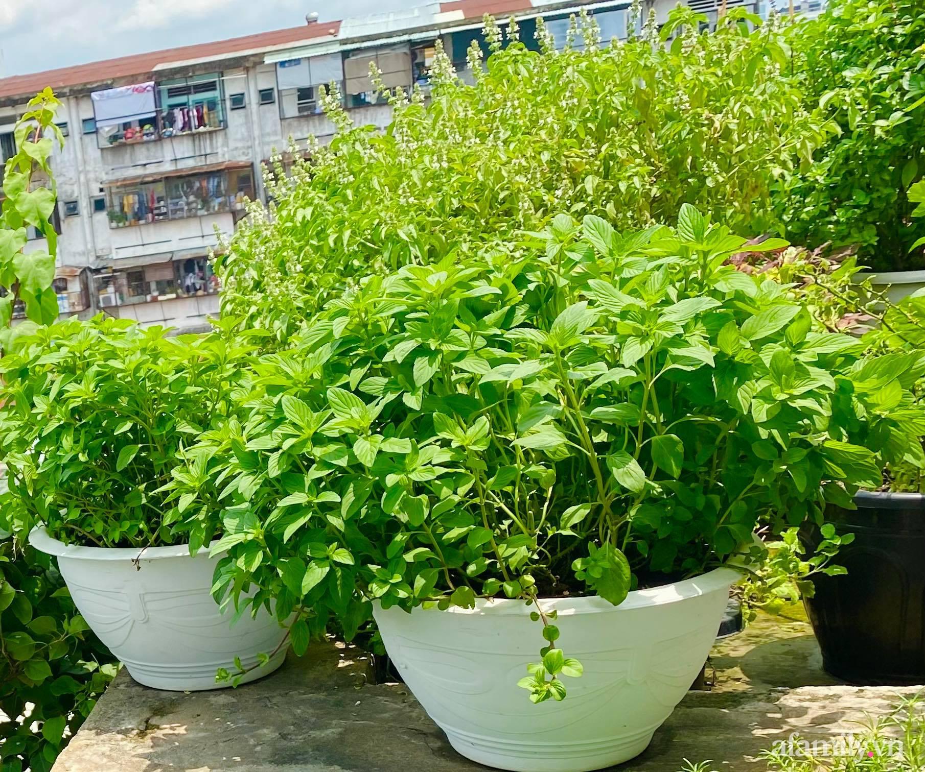Sân thượng phủ kín hoa hồng và rau quả sạch ở Sài Gòn của Hoa hậu Janny Thủy Trần - ảnh 29
