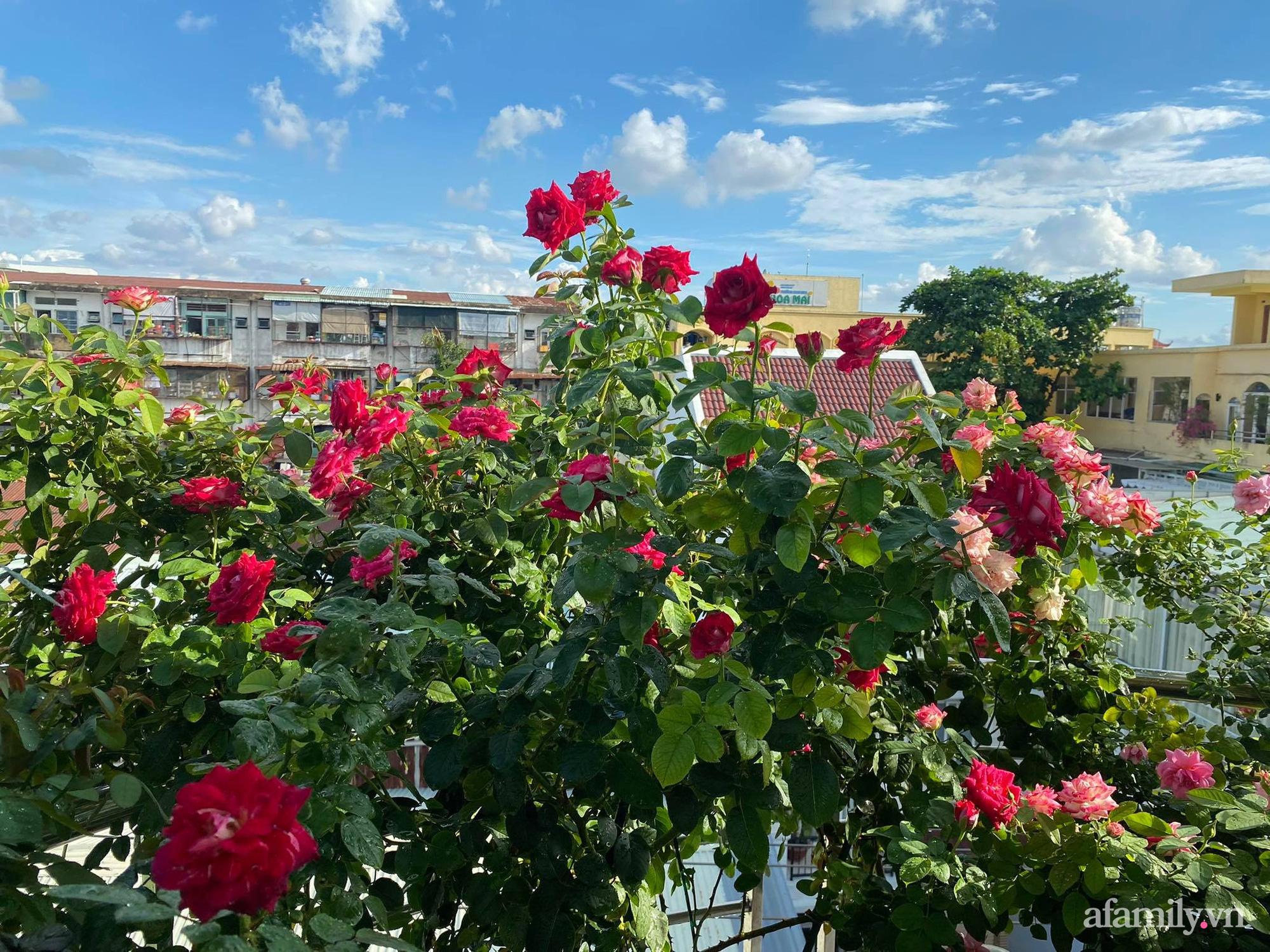 Sân thượng phủ kín hoa hồng và rau quả sạch ở Sài Gòn của Hoa hậu Janny Thủy Trần - ảnh 14