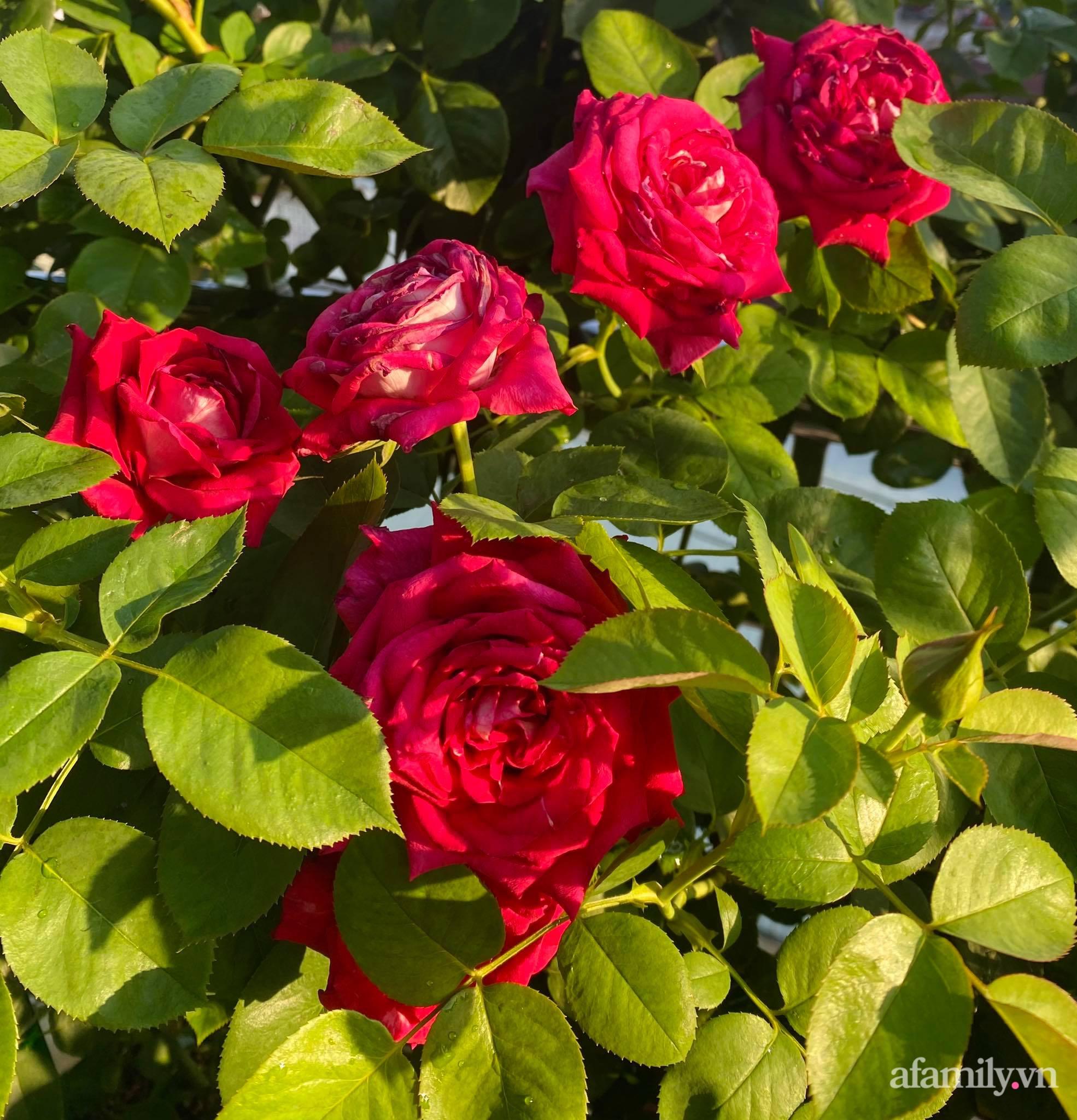 Sân thượng phủ kín hoa hồng và rau quả sạch ở Sài Gòn của Hoa hậu Janny Thủy Trần - ảnh 17