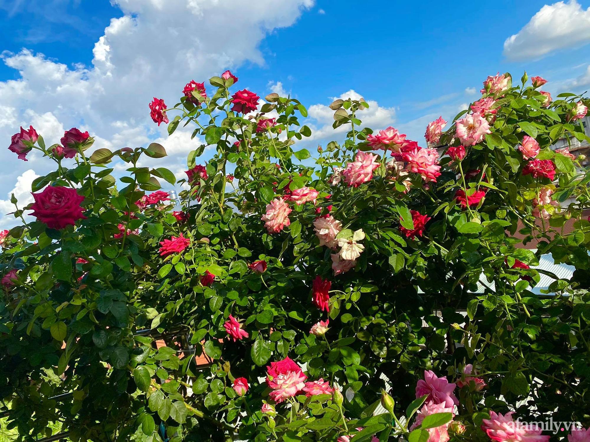 Sân thượng phủ kín hoa hồng và rau quả sạch ở Sài Gòn của Hoa hậu Janny Thủy Trần - ảnh 2