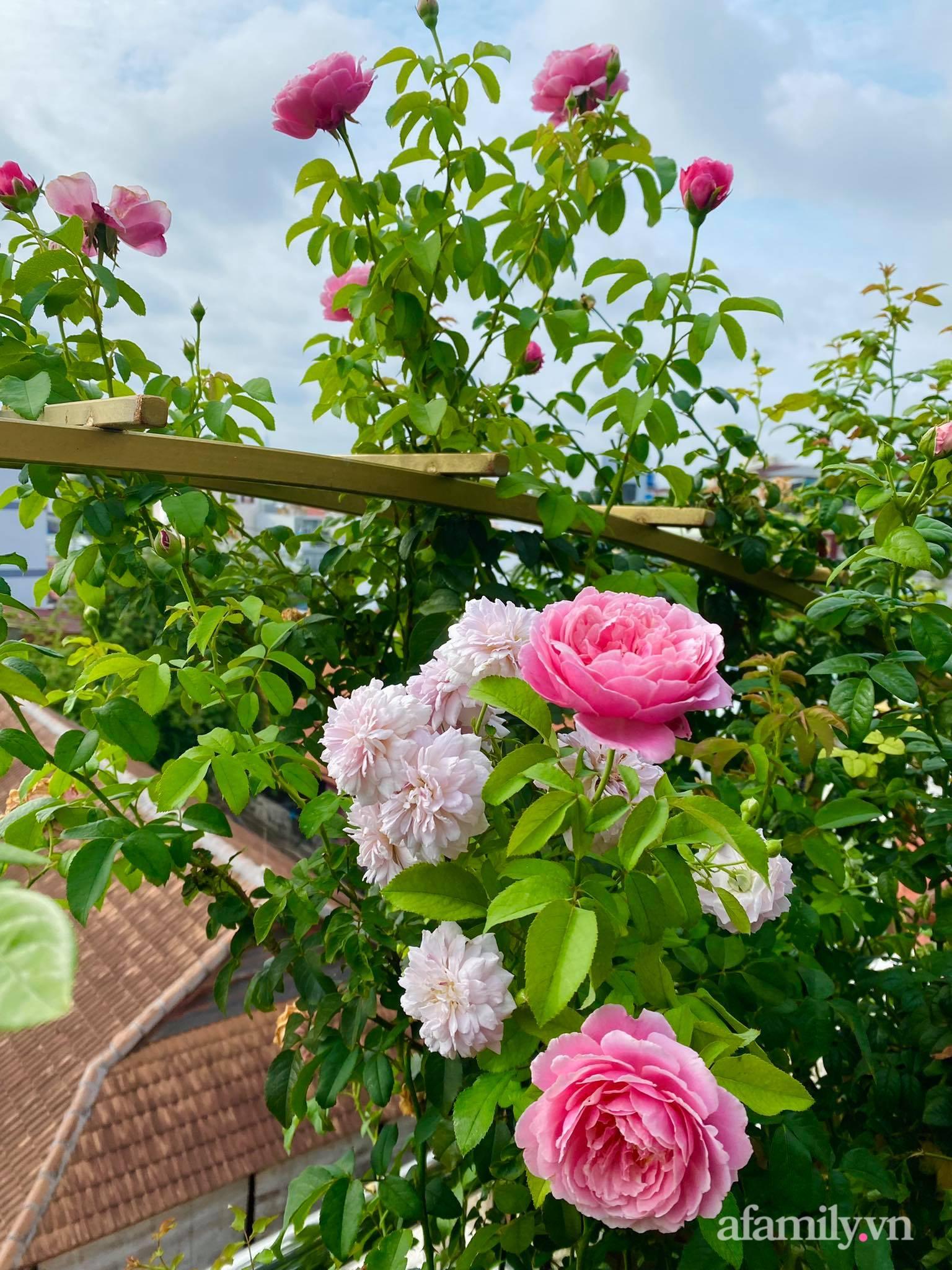Sân thượng phủ kín hoa hồng và rau quả sạch ở Sài Gòn của Hoa hậu Janny Thủy Trần - ảnh 8