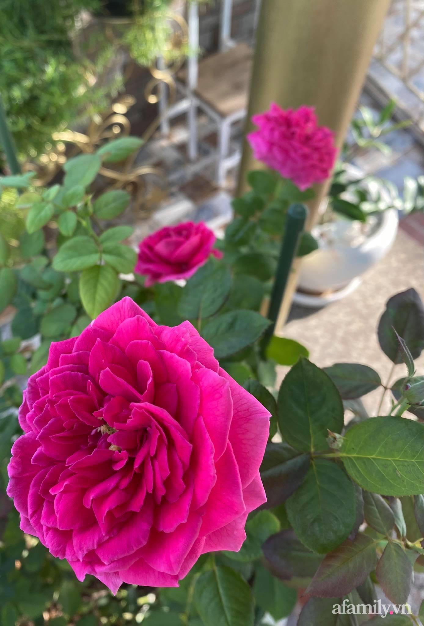 Sân thượng phủ kín hoa hồng và rau quả sạch ở Sài Gòn của Hoa hậu Janny Thủy Trần - ảnh 21