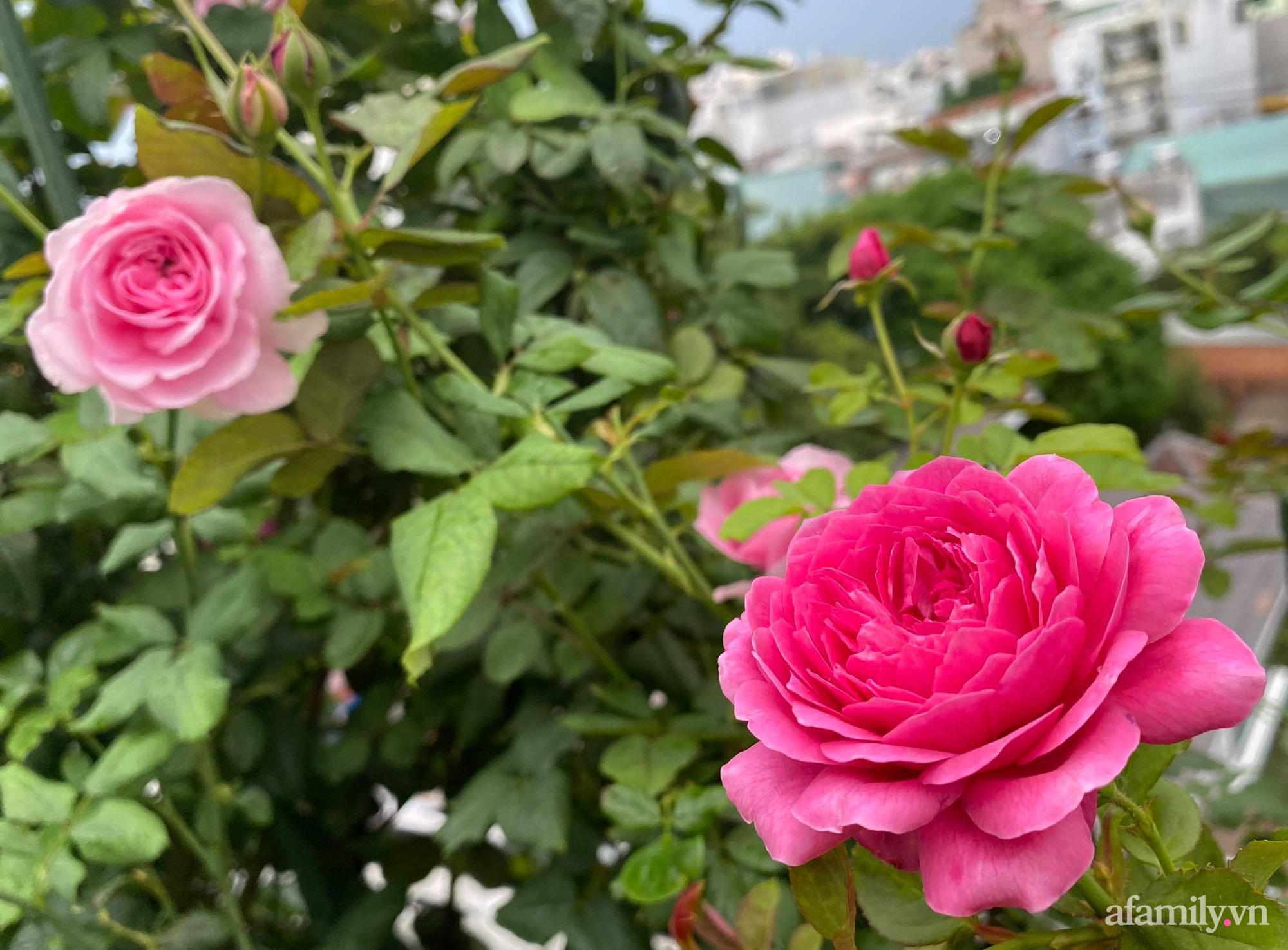 Sân thượng phủ kín hoa hồng và rau quả sạch ở Sài Gòn của Hoa hậu Janny Thủy Trần - ảnh 11