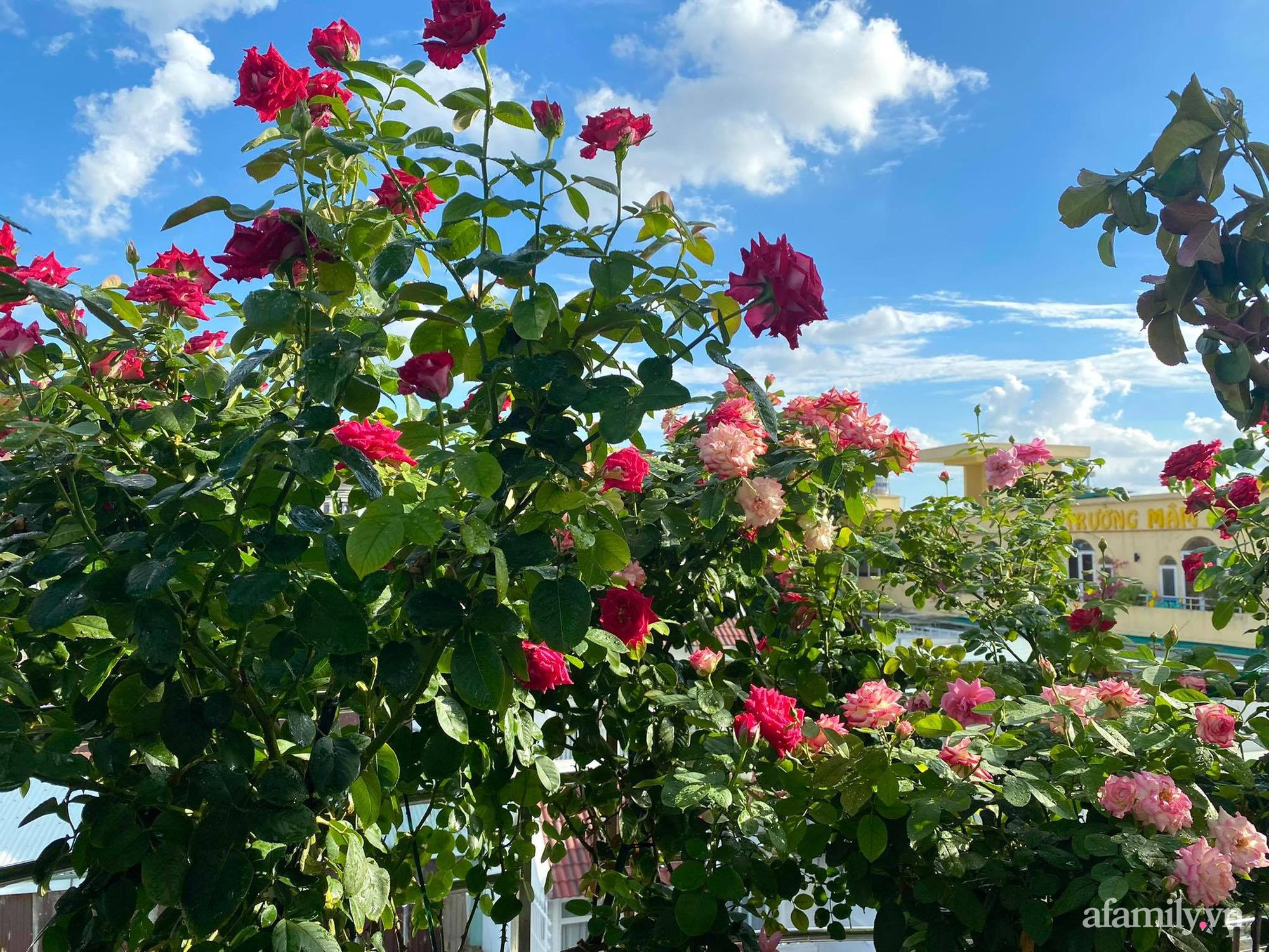 Sân thượng phủ kín hoa hồng và rau quả sạch ở Sài Gòn của Hoa hậu Janny Thủy Trần - ảnh 4