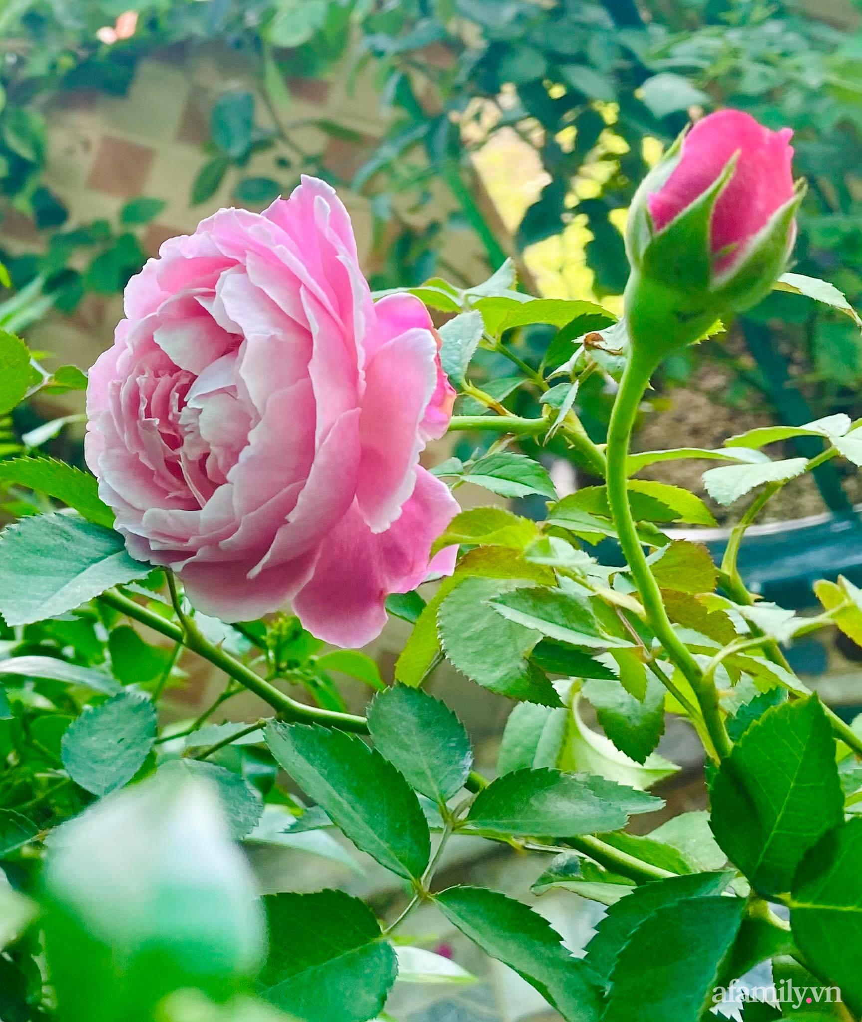 Sân thượng phủ kín hoa hồng và rau quả sạch ở Sài Gòn của Hoa hậu Janny Thủy Trần - ảnh 12