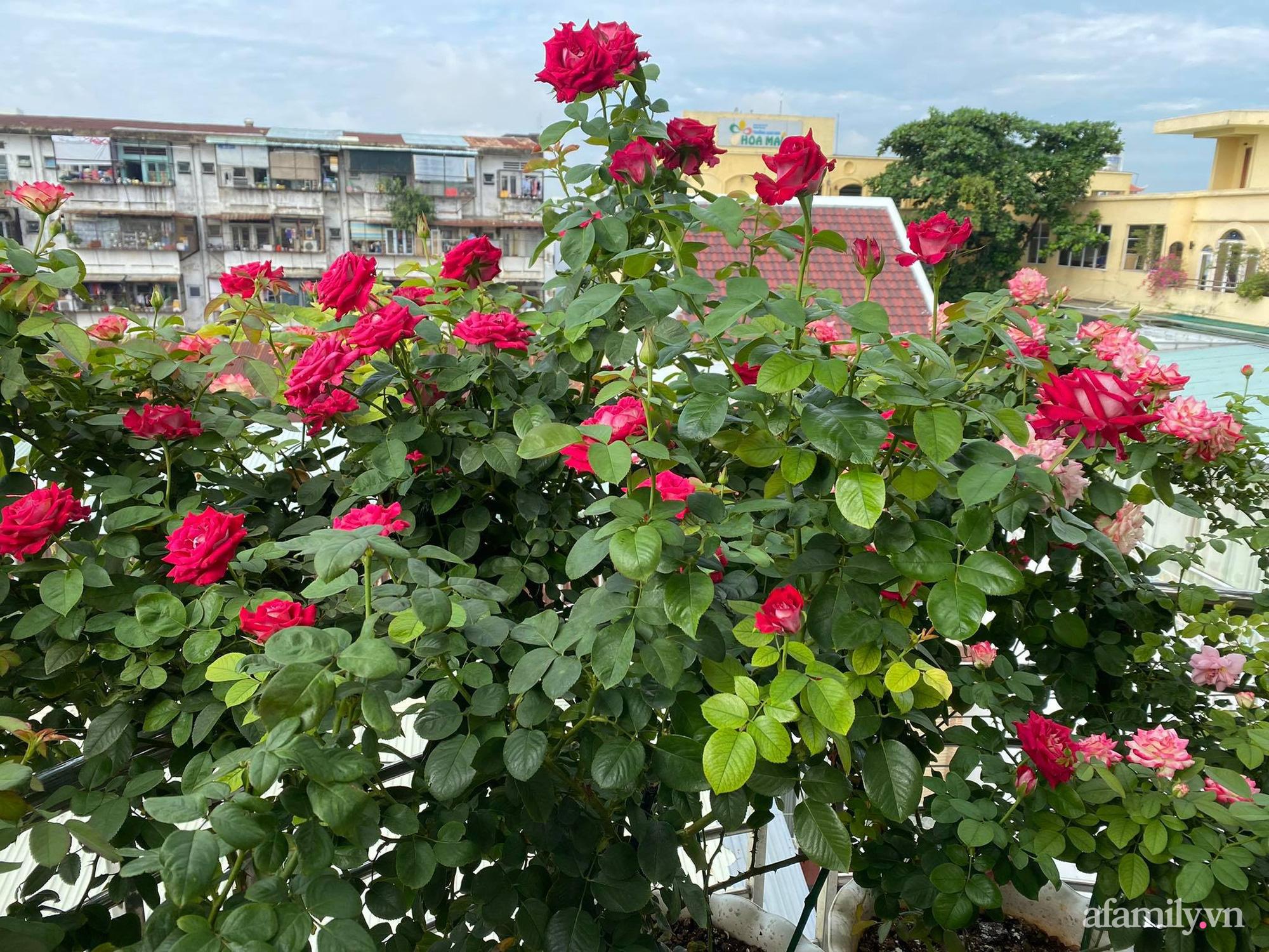 Sân thượng phủ kín hoa hồng và rau quả sạch ở Sài Gòn của Hoa hậu Janny Thủy Trần - ảnh 3