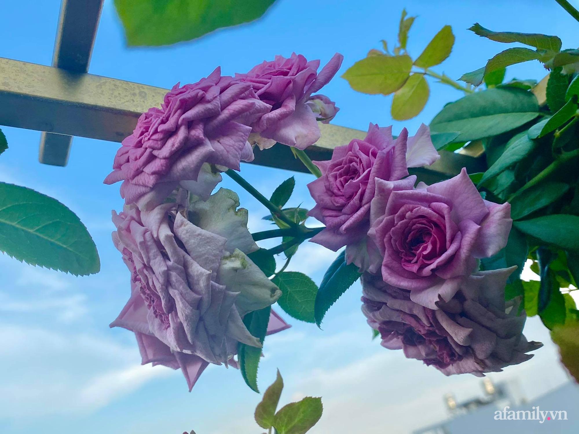 Sân thượng phủ kín hoa hồng và rau quả sạch ở Sài Gòn của Hoa hậu Janny Thủy Trần - ảnh 15