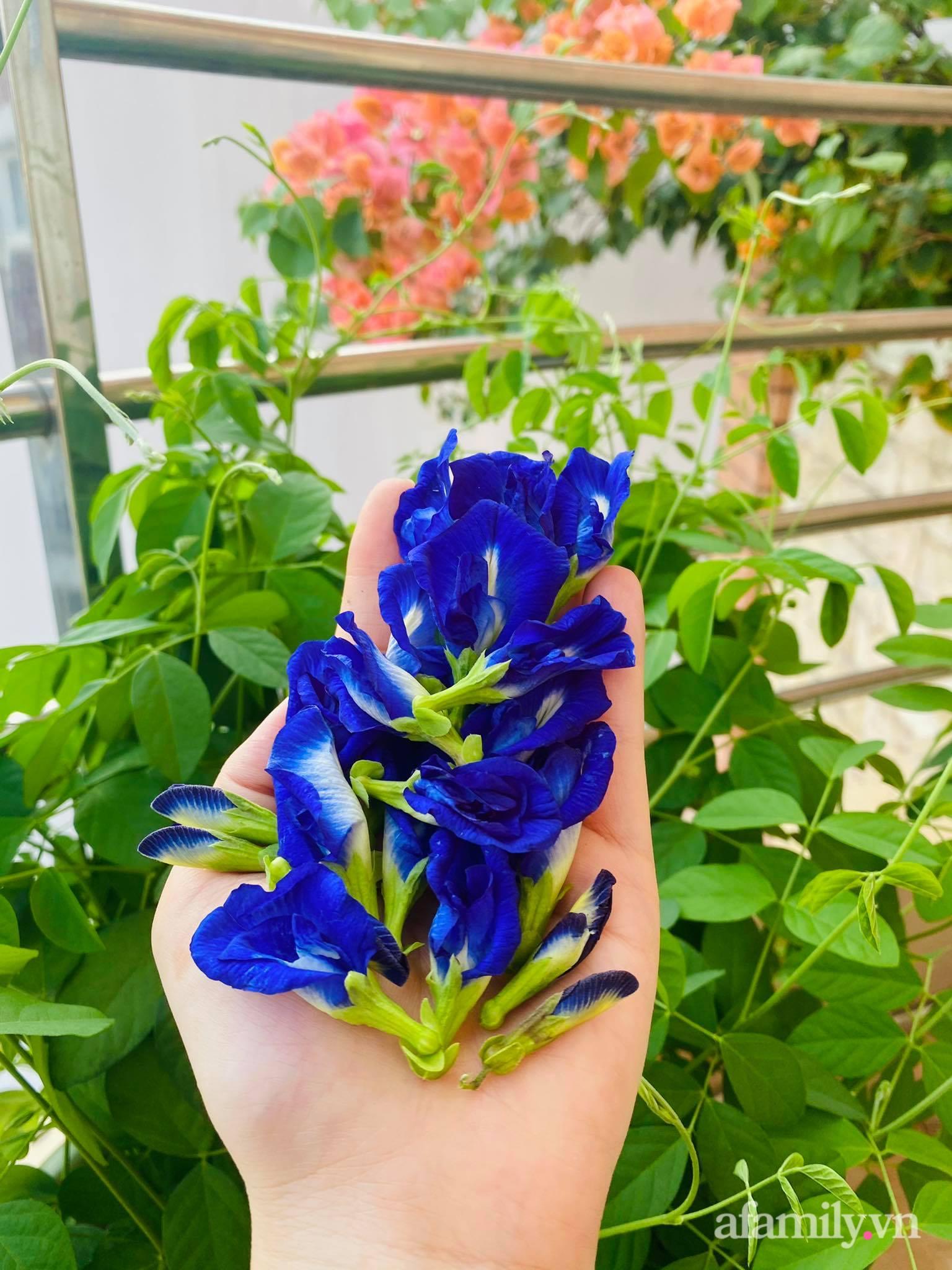 Sân thượng phủ kín hoa hồng và rau quả sạch ở Sài Gòn của Hoa hậu Janny Thủy Trần - ảnh 30
