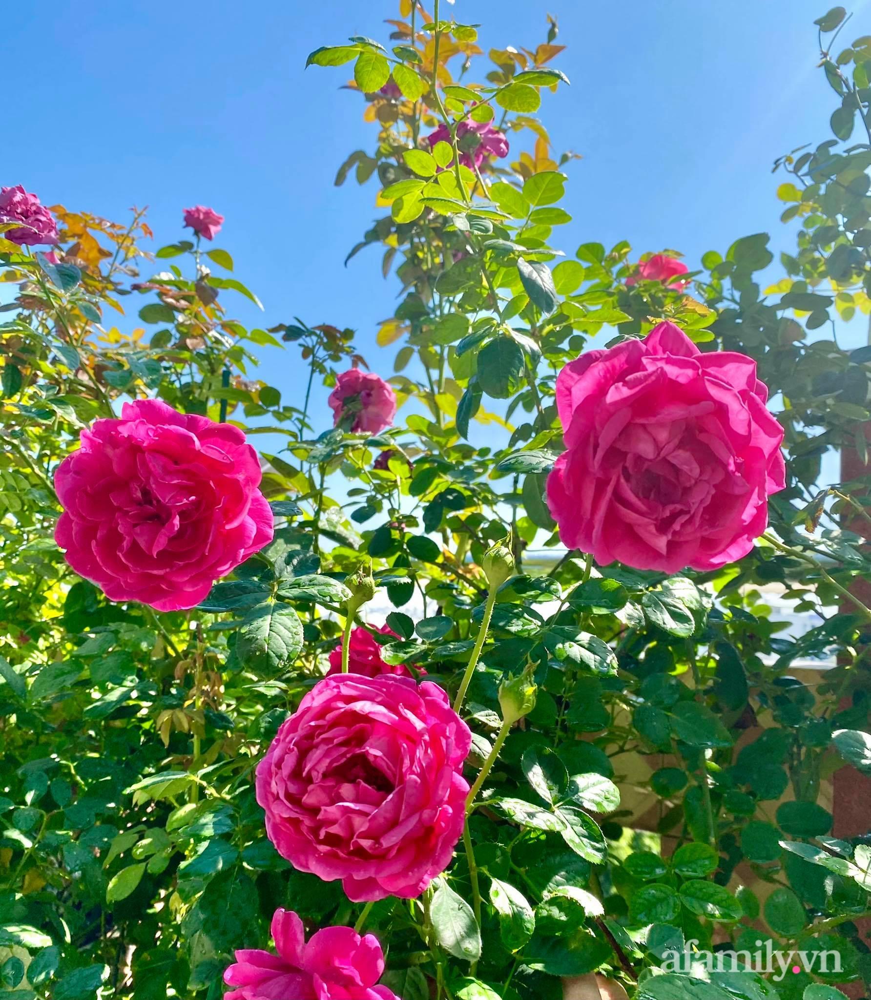 Sân thượng phủ kín hoa hồng và rau quả sạch ở Sài Gòn của Hoa hậu Janny Thủy Trần - ảnh 10