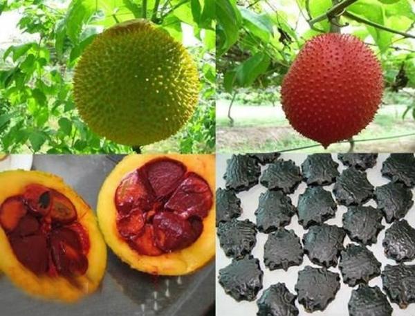Ăn trái cây xong đừng vứt 4 loại hạt này, chúng là