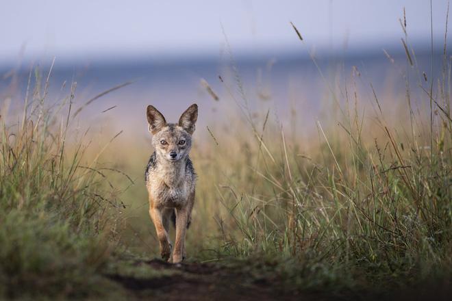 Tận dụng thời gian mắc kẹt ở Kenya do đại dịch, nhiếp ảnh gia tạo ra album ảnh động vật hoang dã ấn tượng - ảnh 8