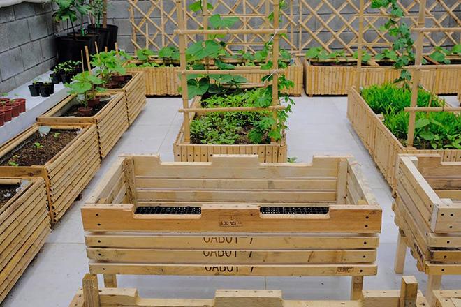 Nông trại xanh - Vinny Farm: Vườn rau xanh trong gia đình Việt - ảnh 3