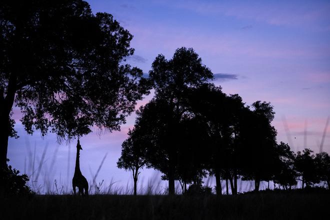 Tận dụng thời gian mắc kẹt ở Kenya do đại dịch, nhiếp ảnh gia tạo ra album ảnh động vật hoang dã ấn tượng - ảnh 7