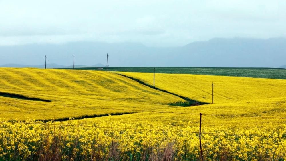 24h qua ảnh: Thiếu nữ chụp ảnh trên cánh đồng hoa cánh bướm - ảnh 5