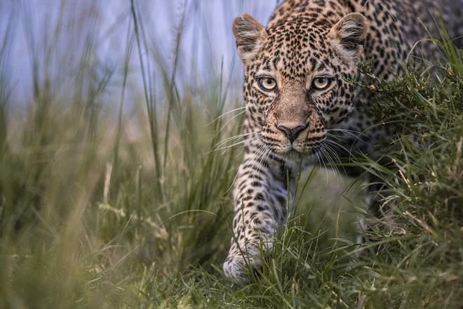 Tận dụng thời gian mắc kẹt ở Kenya do đại dịch, nhiếp ảnh gia tạo ra album ảnh động vật hoang dã ấn tượng - ảnh 10