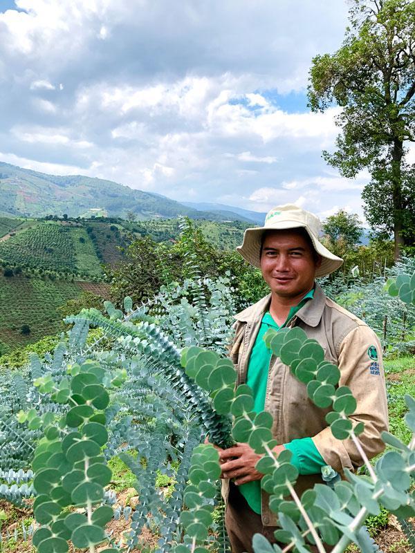 Lâm Đồng: Trồng cây lạ có tên cây đô-la, anh nông dân giỏi chỉ bán cành cũng thu trăm triệu/năm - ảnh 1