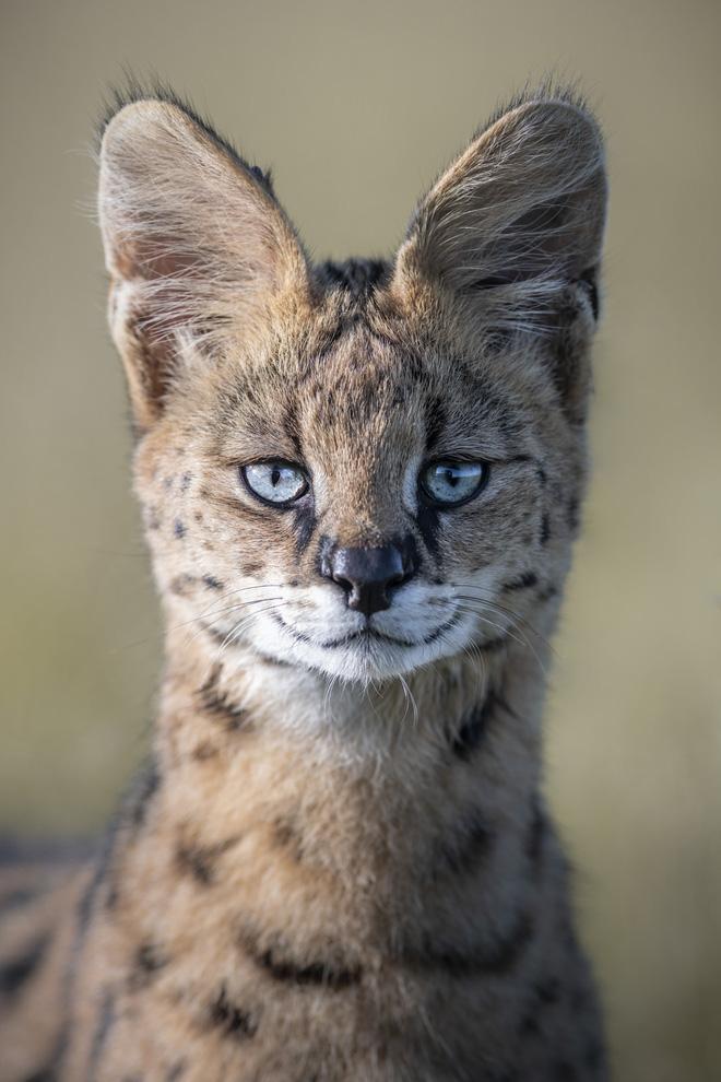 Tận dụng thời gian mắc kẹt ở Kenya do đại dịch, nhiếp ảnh gia tạo ra album ảnh động vật hoang dã ấn tượng - ảnh 9