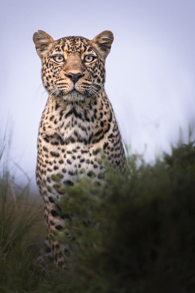 Tận dụng thời gian mắc kẹt ở Kenya do đại dịch, nhiếp ảnh gia tạo ra album ảnh động vật hoang dã ấn tượng - ảnh 4
