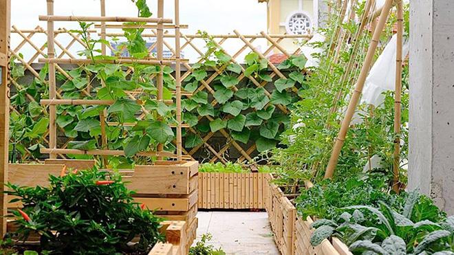 Nông trại xanh - Vinny Farm: Vườn rau xanh trong gia đình Việt - ảnh 1