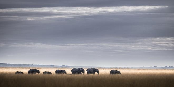 Tận dụng thời gian mắc kẹt ở Kenya do đại dịch, nhiếp ảnh gia tạo ra album ảnh động vật hoang dã ấn tượng - ảnh 5