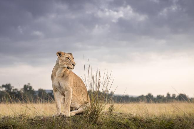 Tận dụng thời gian mắc kẹt ở Kenya do đại dịch, nhiếp ảnh gia tạo ra album ảnh động vật hoang dã ấn tượng - ảnh 11