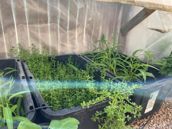 Ngắm vườn rau 350 m2 của ca sĩ Quách Thành Danh ở Mỹ - ảnh 8