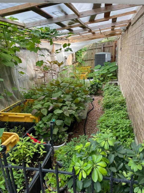 Ngắm vườn rau 350 m2 của ca sĩ Quách Thành Danh ở Mỹ - ảnh 6