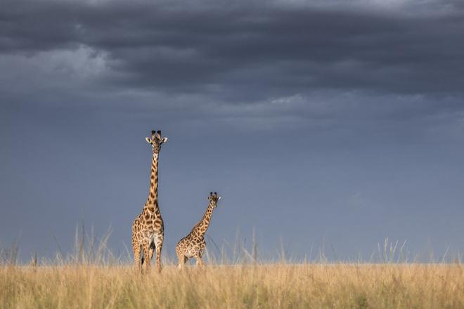 Tận dụng thời gian mắc kẹt ở Kenya do đại dịch, nhiếp ảnh gia tạo ra album ảnh động vật hoang dã ấn tượng - ảnh 6