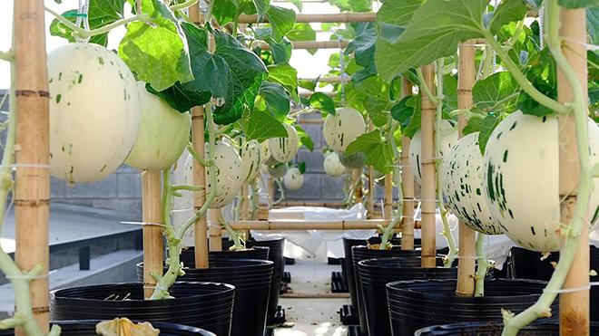 Nông trại xanh - Vinny Farm: Vườn rau xanh trong gia đình Việt - ảnh 2